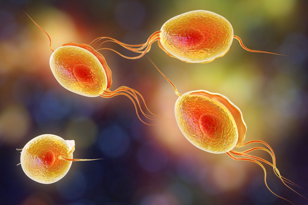 Trichomoniasis: Causes, Symptoms, Treatments & More